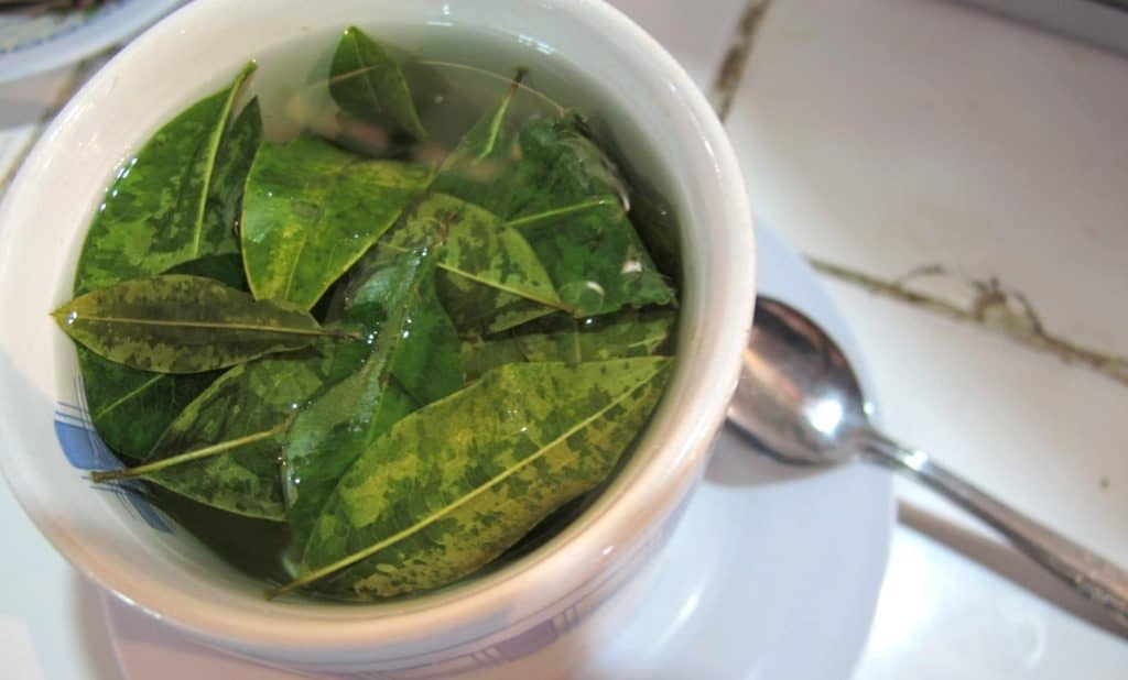 Coca Leaf Tea Positive Screening