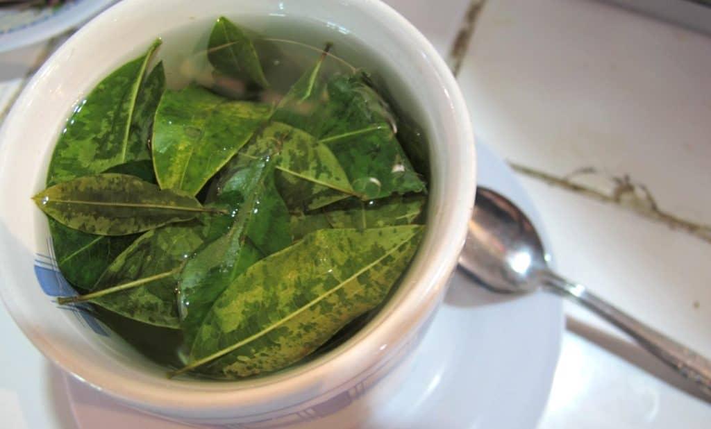 Coca Leaf Tea Positive Screening